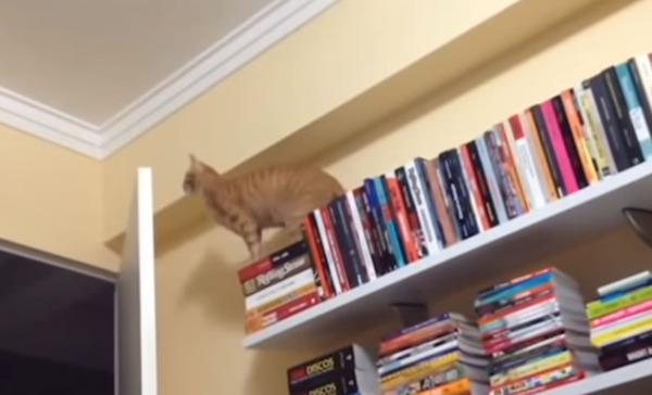 転げ落ちる!いびきをかく!ネコちゃんの笑えるシーン動画集