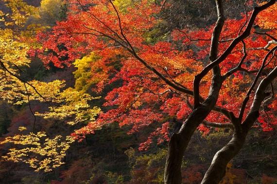 忘れられない絶景! 人生でいちばん感動した紅葉スポット「清水寺→3D並みの美しさ」「日光→滝とのコントラスト」