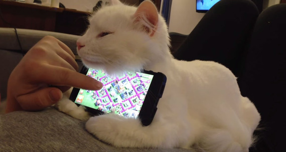 スマホホルダーは本物ネコちゃん!世界で一番幸せなゲームの時間