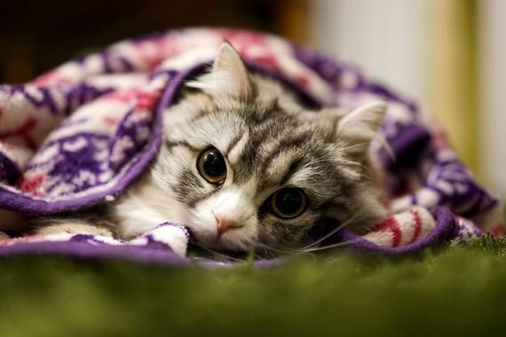 ネコも音楽に癒やされている!?反応率が77%にも達した、ネコの癒し専用音楽が話題に!