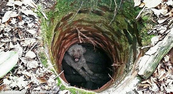 そんなところに?!  失踪した飼い犬が発見されたのはとんでもない場所だった!