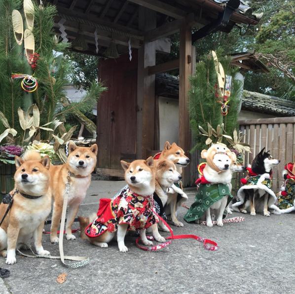 飼い主と一緒にお参りするワン! 神社&お寺にきたワンコ 画像10選