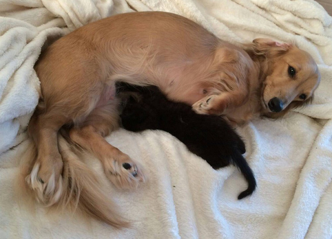 【里親募集中】ドローボーニャンコに美人ネコも……! 個性豊かな保護ネコ達 画像10選
