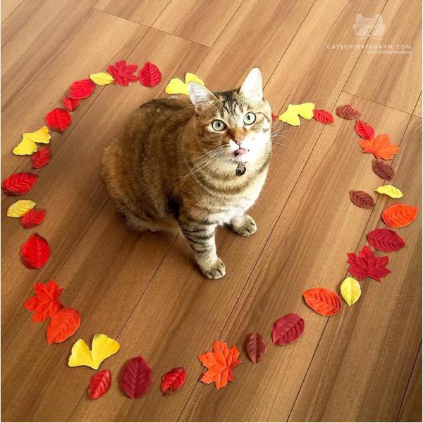 〇〇があればかわいさ倍増? ネコの写真をもっとかわいく撮る裏技 画像10選