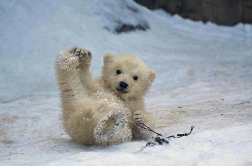 小さくて愛おしくてキュン! かわいすぎるいろいろな動物の赤ちゃん 画像10選