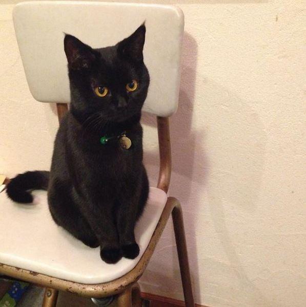 あなたも黒ネコが好きになる? とってもかわいいネコちゃん達 画像10選