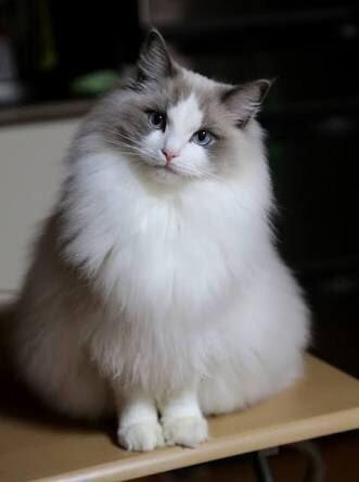 定番の子から珍しい子まで!かわいすぎるネコ 画像10選