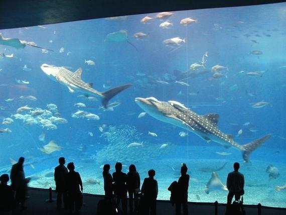 大学生に聞いた、 この夏行きたい全国各地の水族館ランキングTop5!