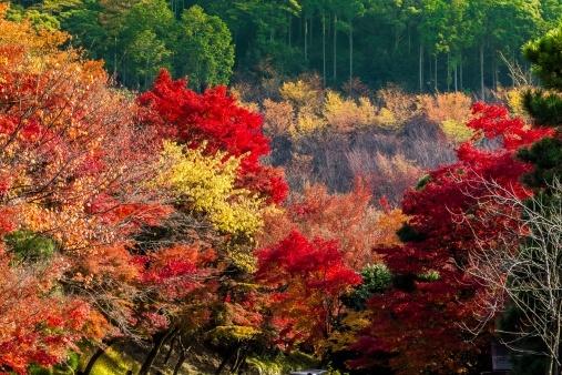 旅ライターが選ぶ! 国内旅行におすすめな日本の絶景スポット13選