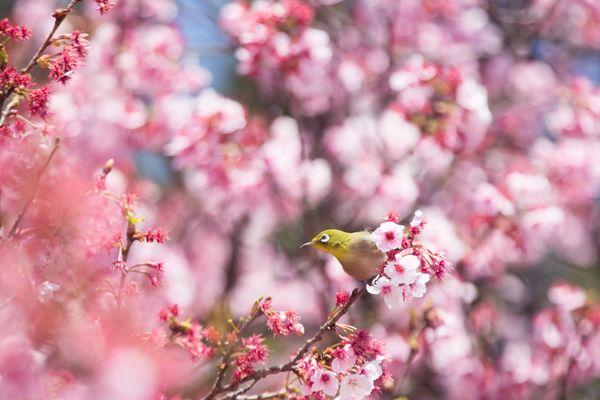 出会いと別れ......「春」といえばどちらをイメージする?→「出会い:66.4%」