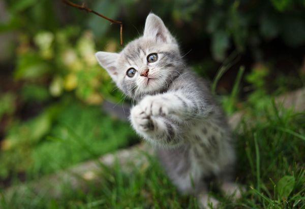 これまでに動物を拾って帰った経験はある? 飼ってもらえた人は約半数。