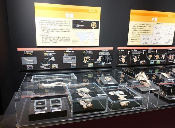 #へんてこアート入門 『大哺乳類展2―みんなの生き残り作戦』編